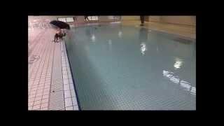 チワワのななちゃん グランドッグランドのプールで初泳ぎ.