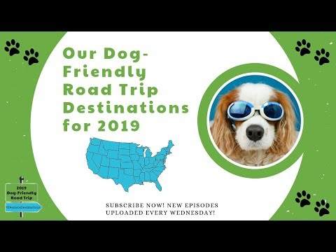 Dog-Friendly Road Trip Ideas   Dexter The Dog's 2019 US Road Trip