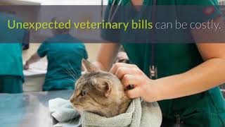 Pet Insurance Roslyn NY - Best Pet Health Insurance For Dogs