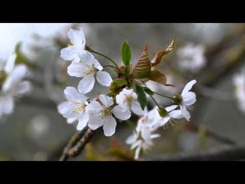 Erboristeria: Video per Riconoscere Erbe, Piante e Fiori di Primavera - Erboristeria Dulcamara from YouTube · Duration:  6 minutes 32 seconds