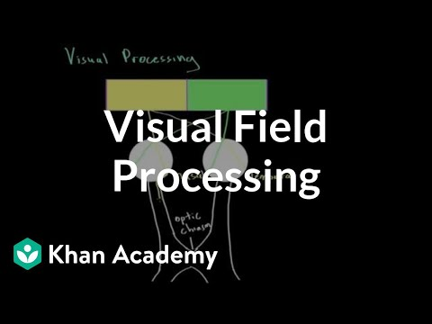 Visual field processing | Processing the Environment | MCAT | Khan Academy