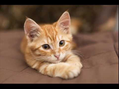 comment liminer les mauvaises attitudes de votre chat youtube. Black Bedroom Furniture Sets. Home Design Ideas