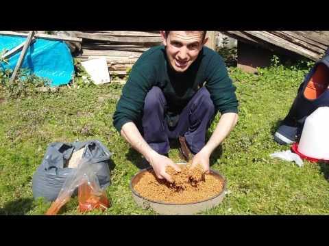 Tavuk Yumurtlaması İçin Yapılan Tarif 2017