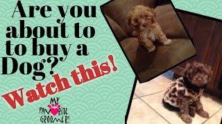 Dog Buyer Beware