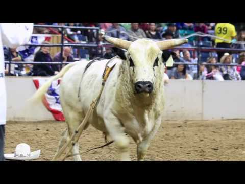 2017 National Western Stock Show Opening Weekend