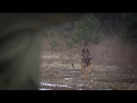 Rino Belgian Malinois Detection Inside And Outside