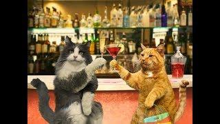 Анекдот про водку от кота Миши