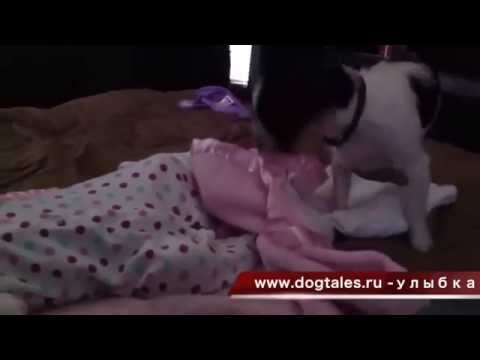 Собаки и дети. Хорошего настроения!