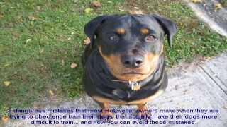 Rottweiler Dog Training Tips On How
