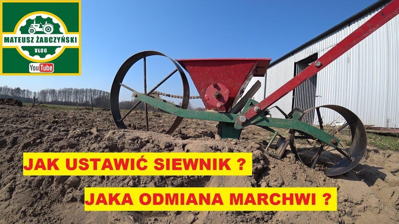 Download ZASIEWAM MARCHEW !