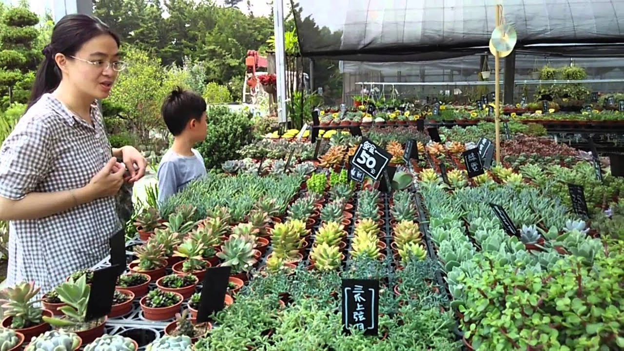 【田尾多肉植物】 - YouTube