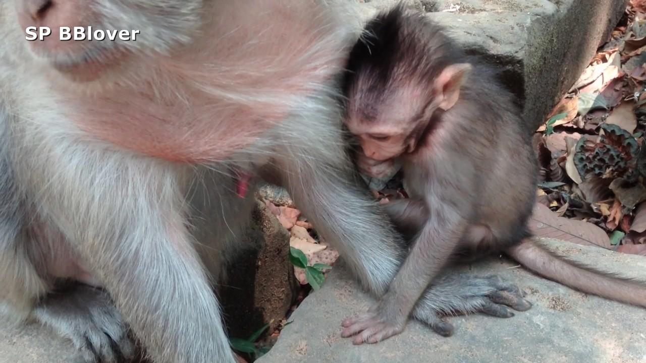 Life Heather Part 51 - Cambodia Monkey Baby - YouTube
