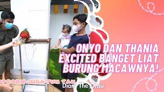 ONYO THANIA EXCITED BANGET LIAT BURUNG MACAWNYA!   DIARY THE ONSU (31/10/20) P2