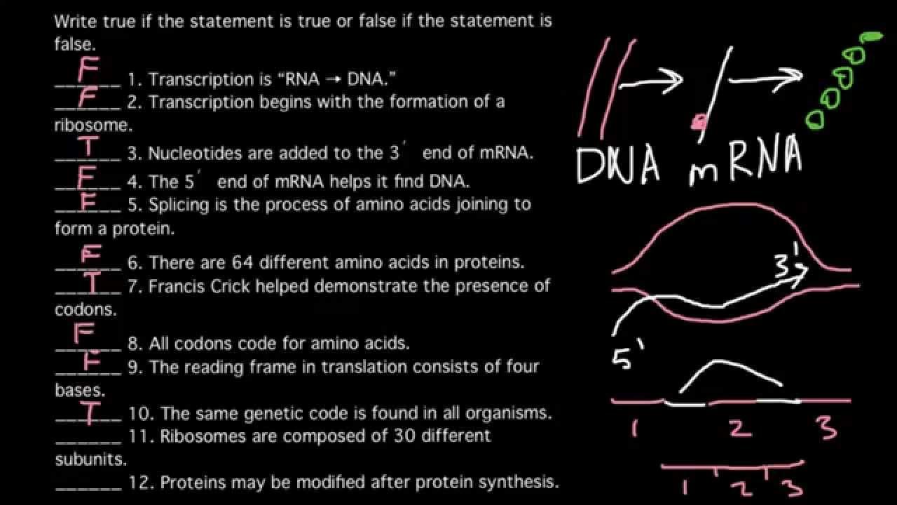 12 True-false Questions About Molecular Genetics