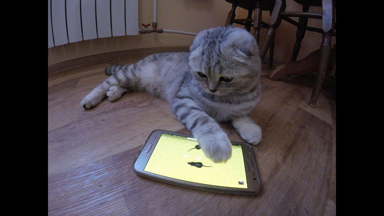 Смешные игры про котов