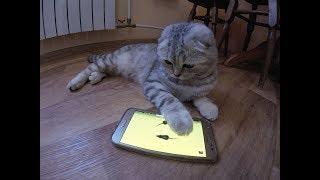 Котики 😻Игры для Кошек на телефоне Game for Cats 🐱 Смешное видео про котенка
