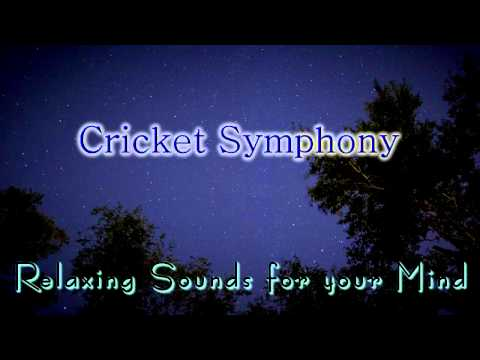 🎧 NATURE SOUNDS for Relaxing, Meditation & Sleep... Night Time Cricket Sounds