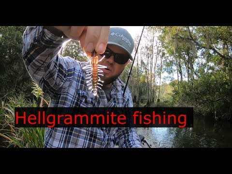 Ned Rig Hellgrammite Fishing! FANTASTIC Suwannee Bass Lure!