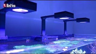 레드씨의 스마트 리프 LED 조명