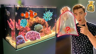 i-bought-new-clown-fish-you-ve-gotta-see-them