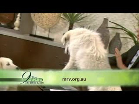 Maremma Rescue Victoria on 9am