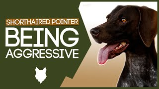 AGGRESSIVE GERMAN SHORTHAIRED POINTER TRAINING! Train Aggressive German Shorthaired Pointer Puppy!