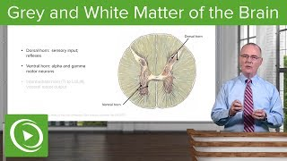 Grey and White Matter of the Brain – Spinal Cord | Lecturio