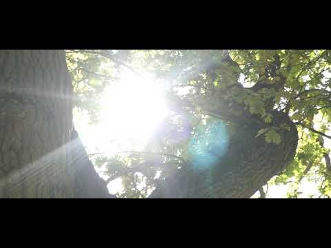 Short Film Sony Alpha 6000