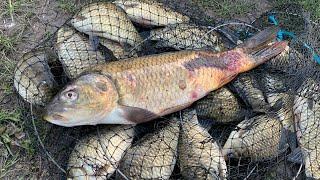 Бешеный клев карася на фидер в мае Плюс поклевывали карпята Рыбалка 2020