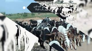 الفلاتة اوالفلان في السودان 14