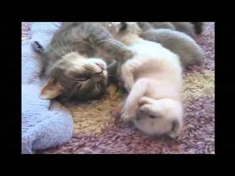 Funny Cats Videos 2015 Compilation Part 3   Funny Pranks & Funny Fails Cats! Funny Videos 2015 HD!
