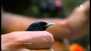 Des Racines et des ailes :La Polynésie Française