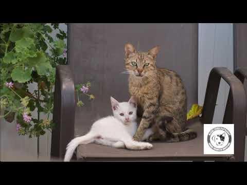 Οι αδέσποτες γάτες της Καρπάθου