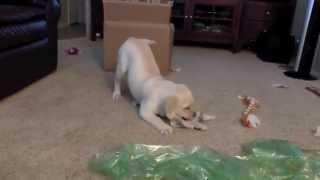 Puppy Zoomies - We Got Mail