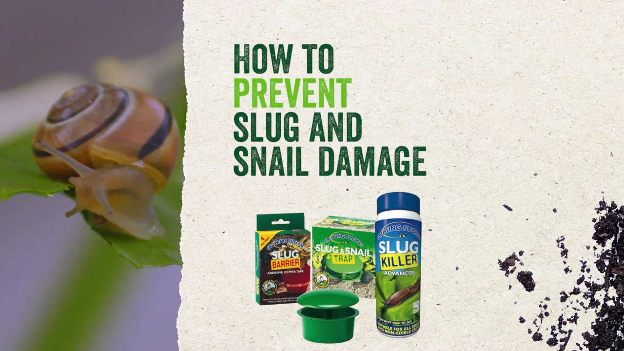 How to get rid of slugs and snails in the garden naturally
