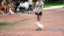 Basic Dog Obedience course, Dog Training Video Singapore.