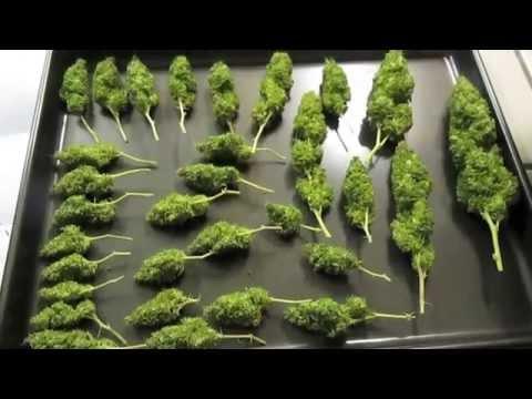 Herbin Farmer - White Widow Harvest