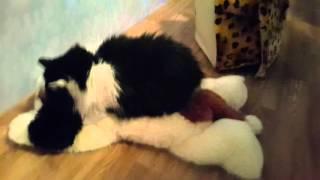 Кошка насилует собаку