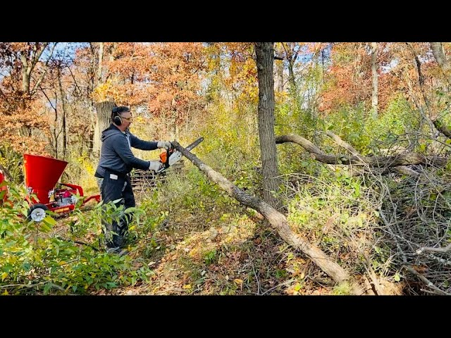 Clearing Brush for Firewood Storage with Split-Fire 4909 Wood Chipper & Stihl Chainsaws