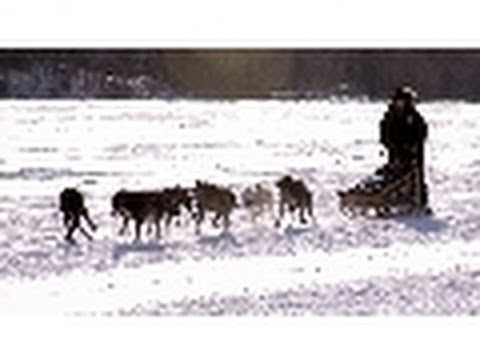 Dog Sled Patrol | National Geographic