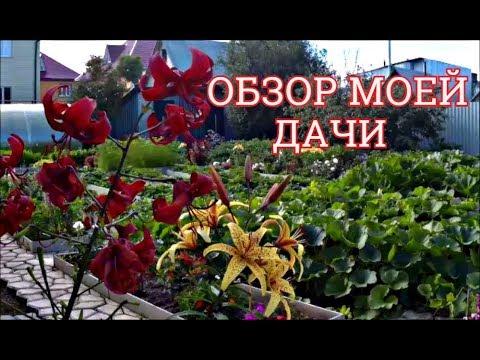 Обзор дачи и огорода видео