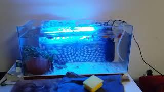 Akvaryum  nasıl temizlenir ( balık nasıl beslenir ve dip çekimi )