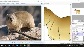 How I Draw A: Cape Hyrax (request)