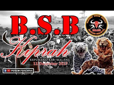 "BANTENGAN MALANG ""KALAP DI SAWAH"" ( BY B.S.B)"