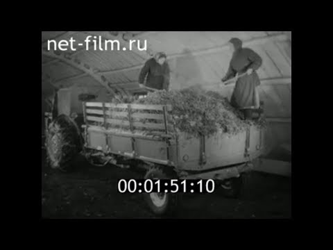 1962г  с. Новоалександрово совхоз Коммунар Суздальский район Владимирская обл