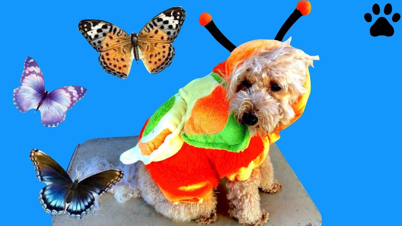 Cool Wallpaper Halloween Puppy - maxresdefault  Pic_82177.jpg