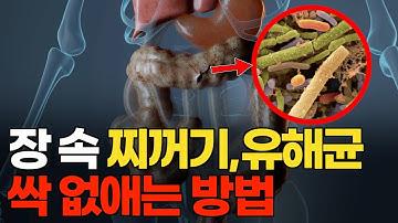 장 속 찌꺼기, 유해균 싹 없애는 방법 (살 안찌는 체질 되는법)