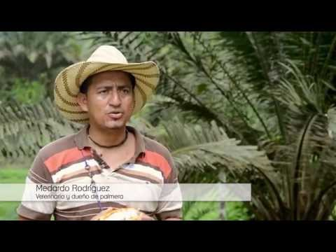 La Fiebre de la Palma (english subtitles) - Oil palm in Ecuador