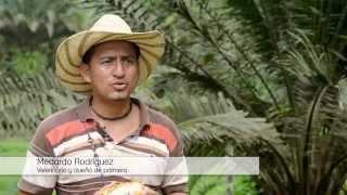 La Fiebre de la Palma (english subtitles) - Oil palm in Ecuador