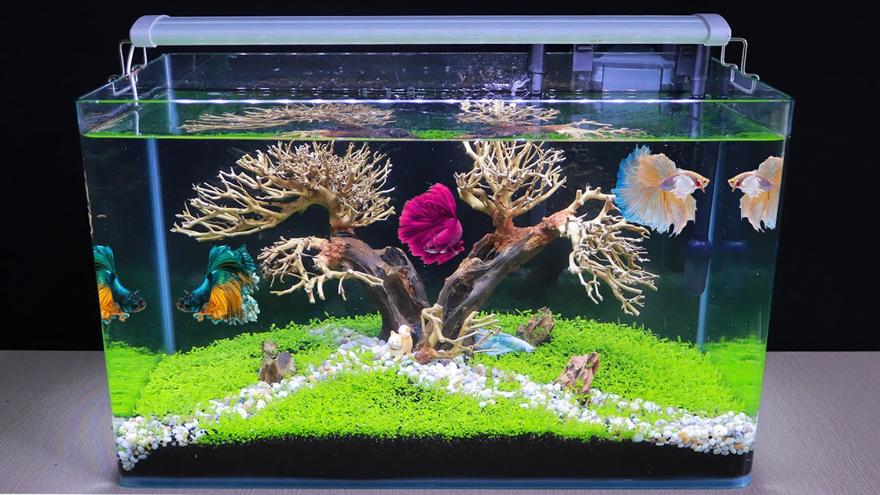 How To Make Bonsai Aquatic Planted Aquarium Diy Aquascape No Co2 For Betta Fish Tank Youtube